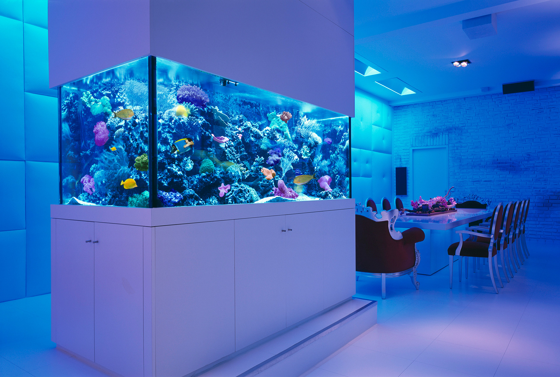 picture of white room blue tank