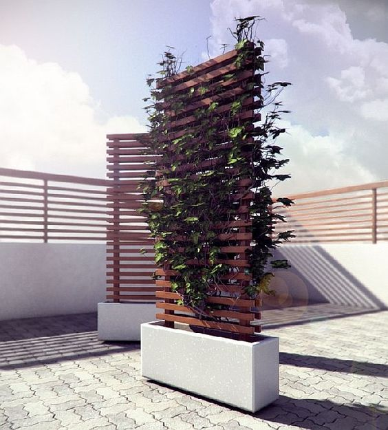 picture of a living wall