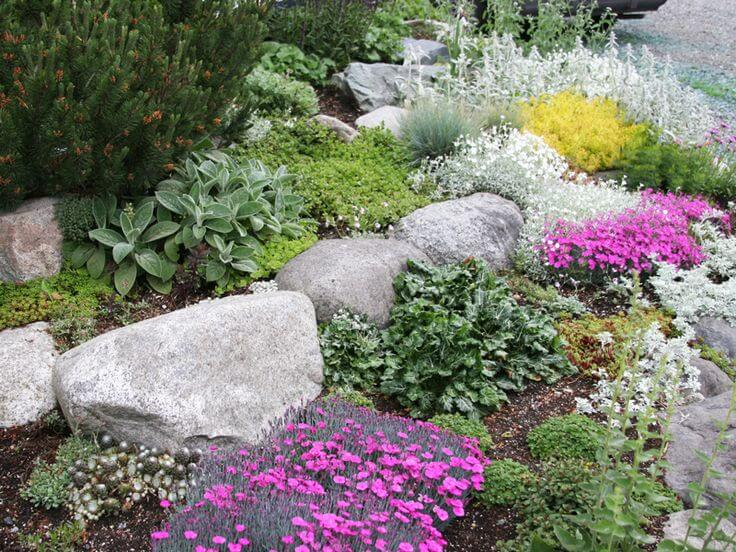 rock-garden-walls-rock-garden-plants